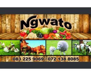 Ngwato